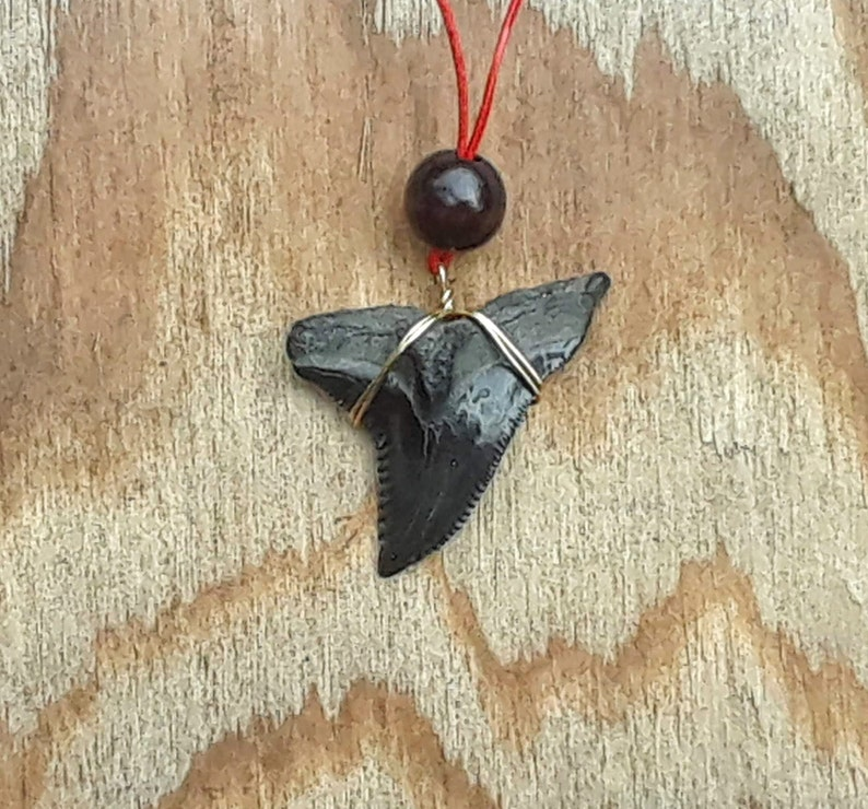 Large 1 12 inch Fossil Snaggletooth Shark Pendant Necklace