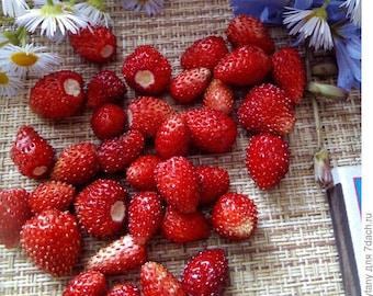 Large Reugen 1g//2000 Seeds Alpine Strawberry Fruit