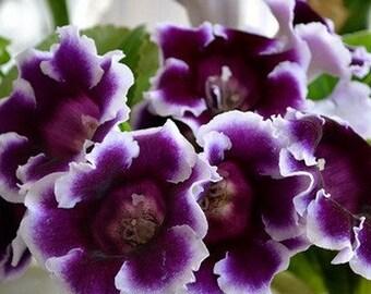 Blue Gloxinia Flower Clay Plant Handmade Dollhouse Miniature Garden Accessory