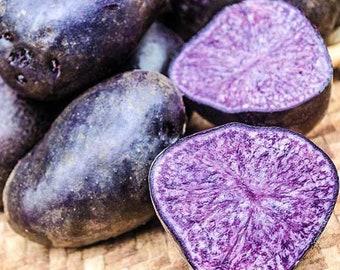 "Rare True Potato Seeds ""PURPLE EXPLOSION"" High Quality Original Russian Seeds - TPS - Not Tubers"