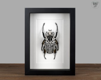 Goliathus orientalis, Real beetle in the frame Showcase Preparation Nature Deco Entomology Insect Taxidermy Curiosities Insect Art beetle