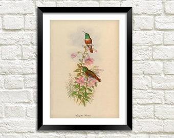 Vintage Birds Print: Pink Flower Nature Art Illustration