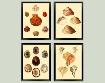 Sea Shell Prints: Vintage Seaside Beach Art Illustrations