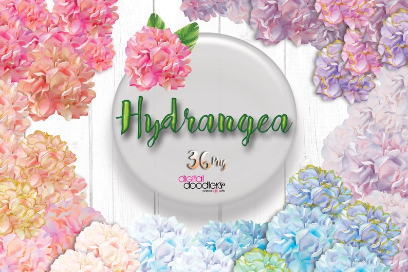 Digitally Hand Painted Watercolor Hydrangeas Clipart Floral image 0
