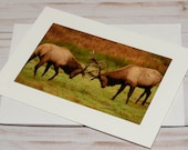 Roosevelt Bull Elks, Deers Rutting / Photo, Photography Greeting Card / A2 / Handmade Greeting Card
