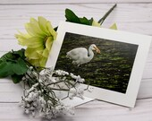 Egret with Fish / Photo, Photography Greeting Card / A2 / Handmade Greeting Card
