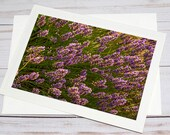 Purple Flowers Bush, Florence Oregon / Photo, Photography Greeting Card / A2 / Handmade Greeting Card