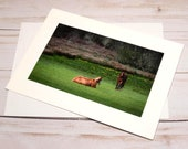 Two Horses North of Florence Oregon / Photo, Photography Greeting Card / A2 / Handmade Greeting Card