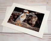 Puffin / Photo, Photography Greeting Card / A2 / Handmade Greeting Card