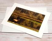 Lone Elk, Dean Creek Elk Viewing Area, Reedsport Oregon / Photo, Photography Greeting Card / A2 / Handmade Greeting Card