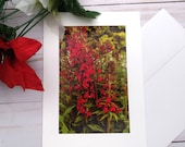 Red Flowers Bush / Photo, Photography Greeting Card / A2 / Handmade Greeting Card
