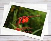 Orange Wildflowers, Florence Oregon / Photo, Photography Greeting Card / A2 / Handmade Greeting Card
