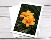 Yellow Wildflowers, Florence Oregon / Photo, Photography Greeting Card / A2 / Handmade Greeting Card