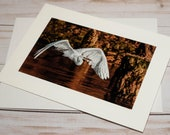 Egret Flying / Photo, Photography Greeting Card / A2 / Handmade Greeting Card