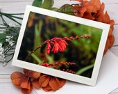 Orange Wildflowers, Florence Oregon / Photo, Photography Greeting Card / A2 / Handmade Greeting Card