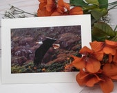 Eagle in Flight / Photo, Photography Greeting Card / A2 / Handmade Greeting Card