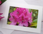 Pink Flowers, Florence Oregon / Photo, Photography Greeting Card / A2 / Handmade Greeting Card