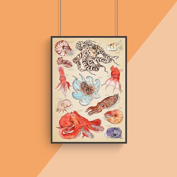 Octopus Poster - Cephalopod Art - Underwater Nature Print - Watercolour Illustrations - Kraken Ocean Poster - Kids Room - Science Print