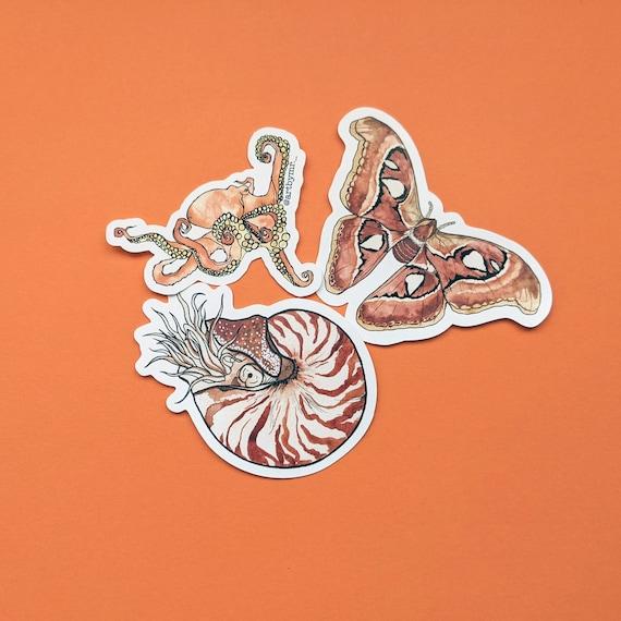 Moth Octopus Nautilus Sticker Set - Creature Stickers - Sea Animals - Science Journalling - Planners - Set of 3 - Cut Out Vinyl Sticker