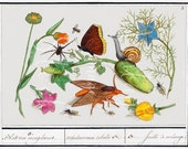 vintage Natural History Ensemble insect flower print digital download image crafts journals stationery decoupage