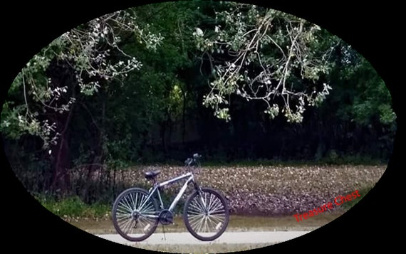 Beautiful Photo of a Bike in the Woods
