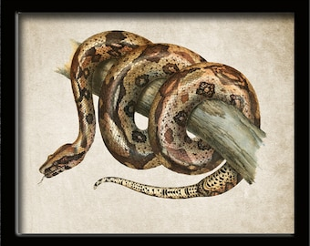 Boa constrictor | Etsy