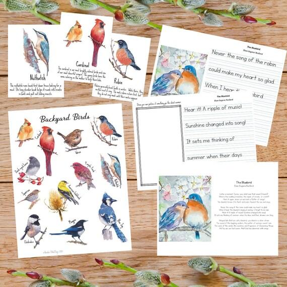 Watercolor Backyard Birds Poster & Flashcards