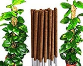 coco pole coconut coir fibre plant support stake for creeper 1 ft to 4ft , Coir Moss Stick Coco Pole for Climbing Indoor Money Plants