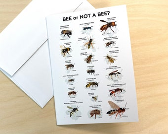 Bee Or Not A Bee, 5 Folded 5x7 Greeting Cards