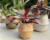 Woven Baskets Boho Storage Baskets Rattan Natural Seagrass Baskets Home Decor Basket Woven Planter Bohemian Planters Wicker Planter