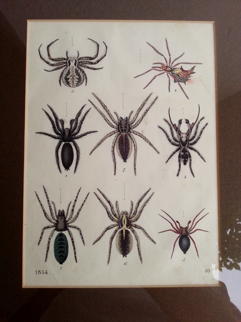 Copper Engraving 1854 with Frame Spinning Old Colored Spectacular Original