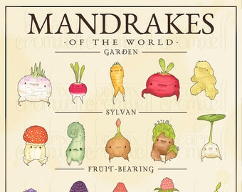 "Mandrakes of the World 11x14"" Art Print"