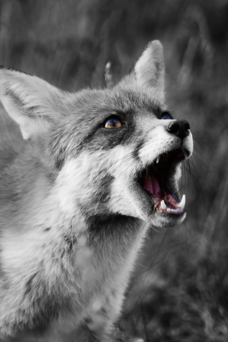 FOX PORTRAIT ANIMAL WILDLIFE PHOTOGRAPHY ART PRINT Poster Decor Wall Picture