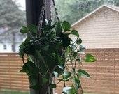 Large hanging plant holder
