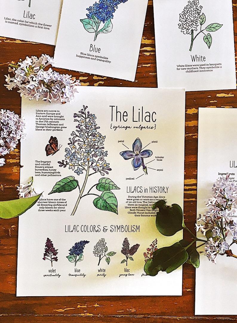 Lilac Flower Nature Pack  Homeschool Printable Charlotte image 0