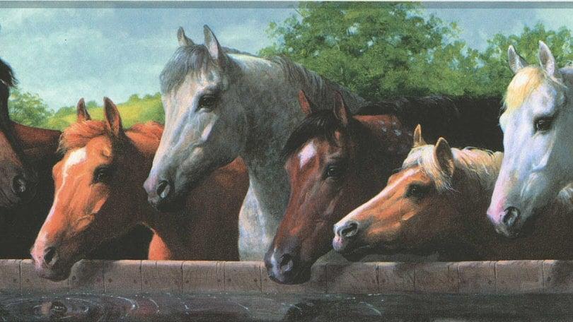Horses at Fence Wallpaper Border BH1802b