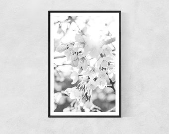 Blooming Cherry Blossoms – Flowers – Black & White – High Quality Lustre Print