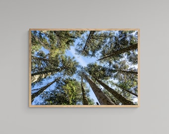 Trees – High Quality Lustre Print