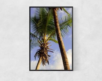 Palm Trees Print – High Quality Lustre Print