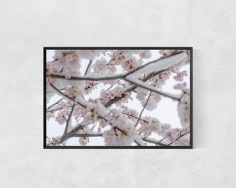 Blooming Cherry Blossoms in the Snow – Flowers –Winter – High Quality Lustre Print