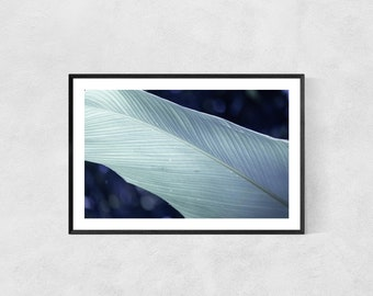 Plant Print – High Quality Lustre Print