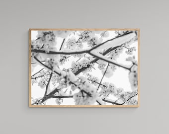 Blooming Cherry Blossoms in the Snow – Winter Flowers – Black & White – High Quality Lustre Print