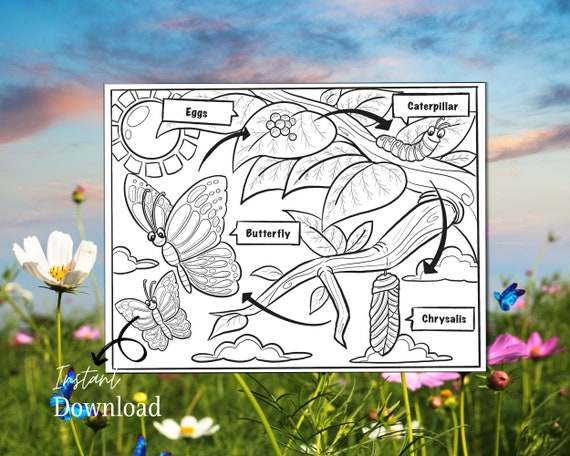 Life Cycle of a Butterfly Printable Coloring Page Homeschool