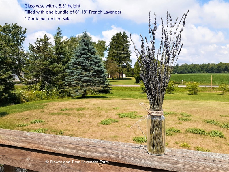 Dried Organic French Lavender 6  18 Bunches / image 0