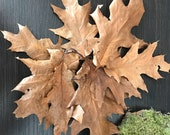 100 oak leaves, autumn joy, autumn wonder, November, falling leaves, oak leaves, autumn decor.