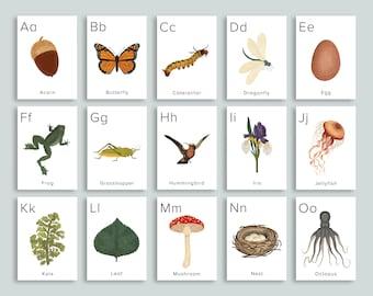 Nature ABC Cards Printable   Homeschool Printables Preschool Nursery Wall Art Alphabet   classroom Letter ABCs Flashcards   Pre k Flash card