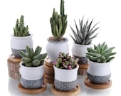 Mini Ceramic Snow Style Succulent Planter Pot and Bamboo Trays, Set of 6, Office and Table Decoration, Gift for Wedding, Birthday, Christmas
