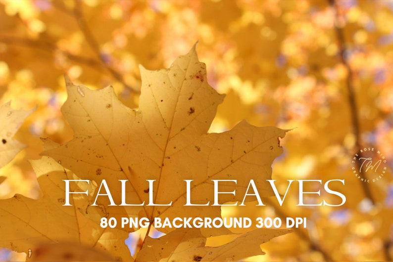 Overalys Fall Leaves fall overlays photoshop Fall leaves image 0