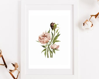 Old pink peony poster, reproduction original work, botanical illustration, print for interior decoration, watercolor