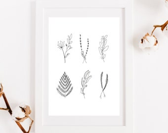 Poster herbs, reproduction original work, botanical illustration, print for interior decoration, pencil, ink